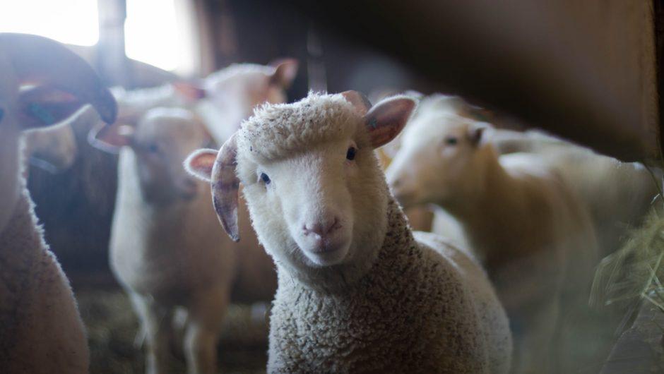 Condition animale : les mentalités évoluent